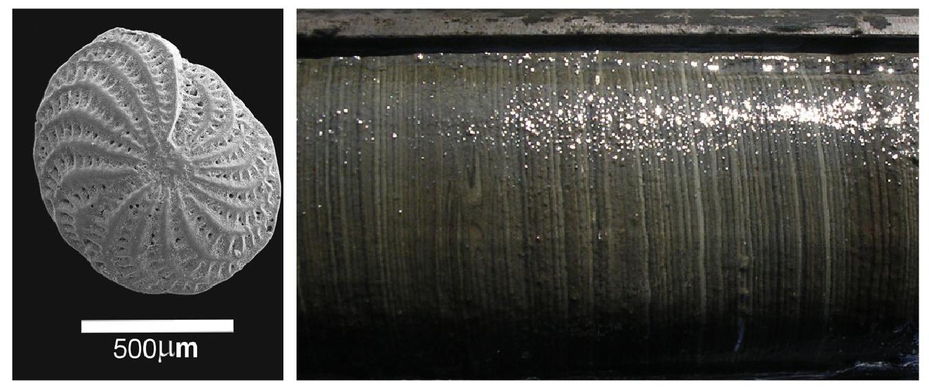 Klimaarkiv: Foraminiferer og sedimentkjerne