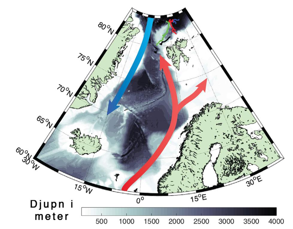 Havstrømmene i de nordiske hav. Naturen